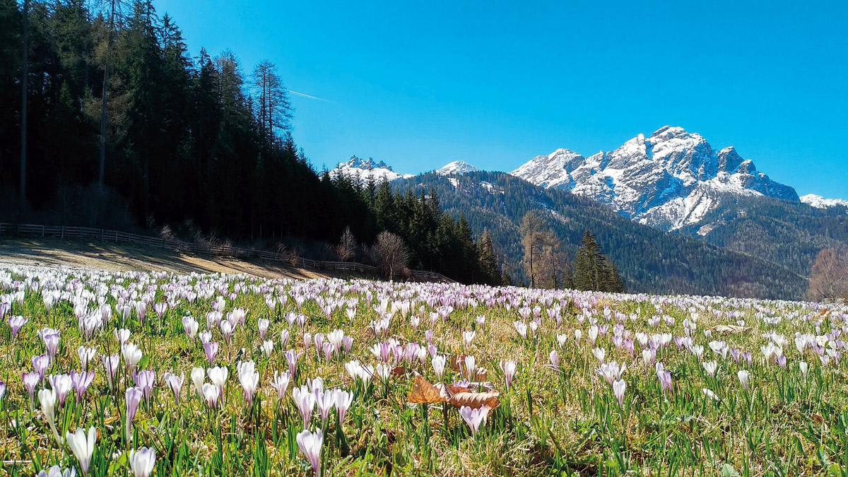 Muttertagsreise nach Tirol 2022